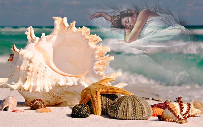 Сон ракушка Индийский океан