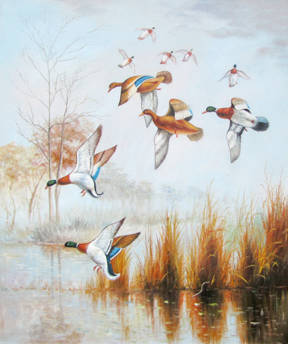 Летять додому дикі качки