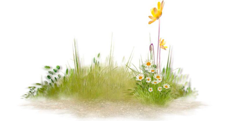 Ромен-цвіт